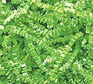 1 LB LIME GREEN CRINKLE CUT SHRED
