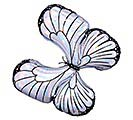 "30""PKG IRIDESCENT BUTTERFLY SHAPE"