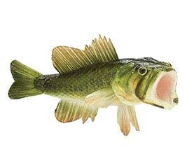 "FLORAL BASS FISH 8.25""L"