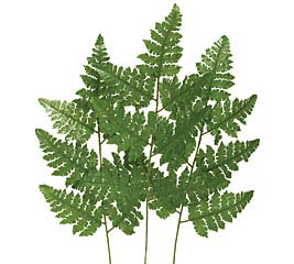 SILK LEATHER LEAF FERN STEM