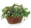 DARK OVAL WILLOW BASKET FOLDING HANDLES