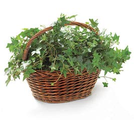 CASE- WILLOW BASKETS