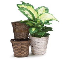 "4"" BAMBOO POT COVER SET"