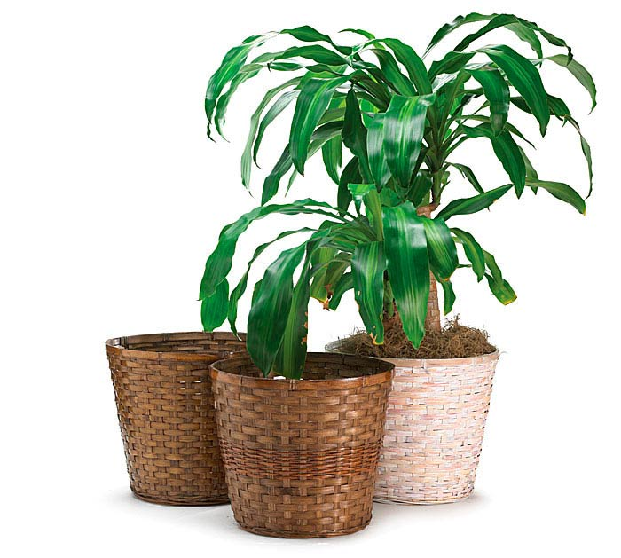 "12"" BAMBOO POT COVER SET"