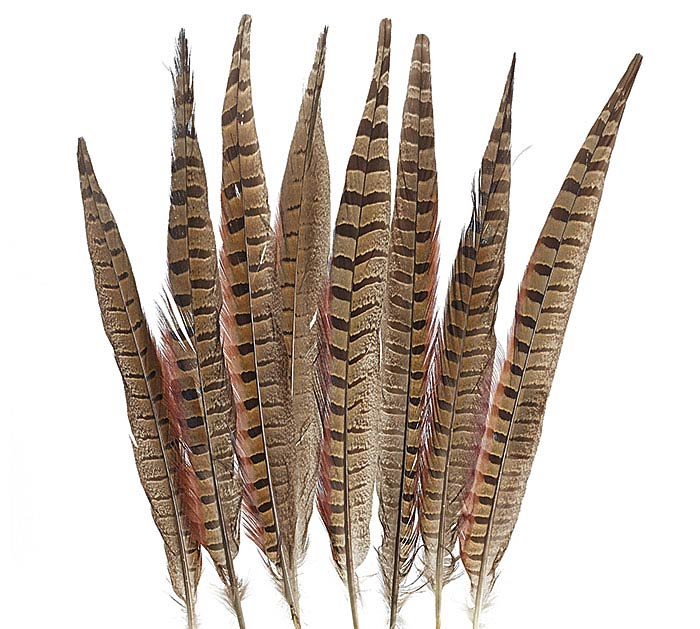SMALL PHEASANT FEATHER PACKAGE