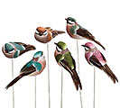 WOODLAND ASSORTED BIRD PICK SET