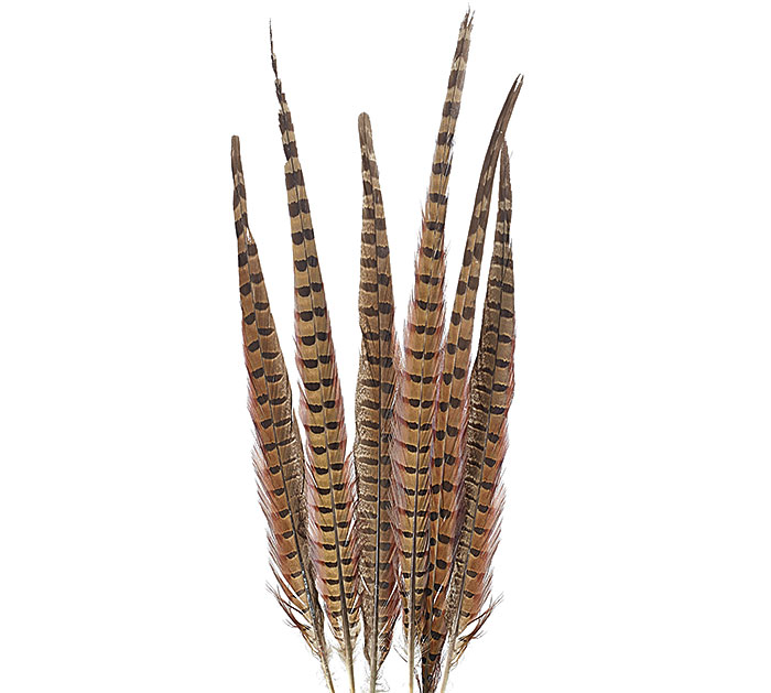 LARGE PHEASANT FEATHER PACKAGE