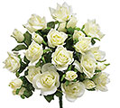 IVORY SILK ROSE BUSH