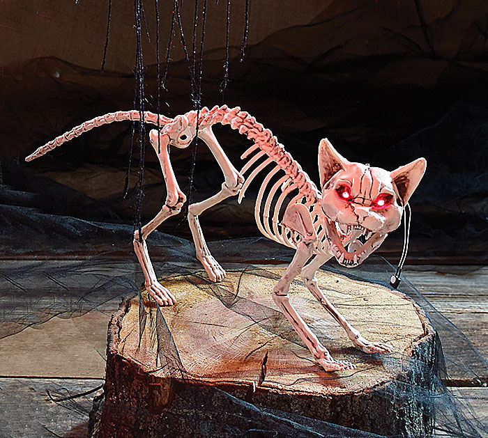 ANIMATED SKELETON CAT