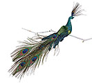 LARGE BLUE/GREEN FEATHER PEACOCK CLIP