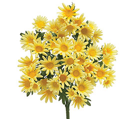 YELLOW SILK DAISY BUSH