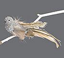 SILVER GLITTERED BIRD CLIP