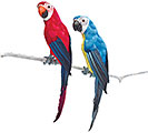 SILK AND FEATHERS PARROT FIGURINE SET