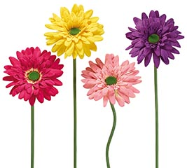 "49"" SINGLE BLOOM DAISY ASSORTED COLORS"