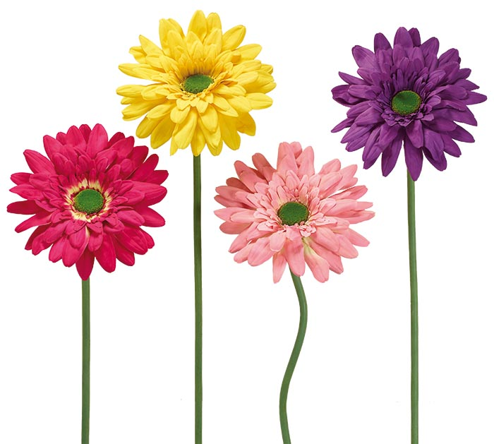"""49"""" SINGLE BLOOM DAISY ASSORTED COLORS"""