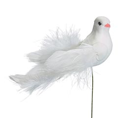 PICK DOVE WITH LONG TAIL