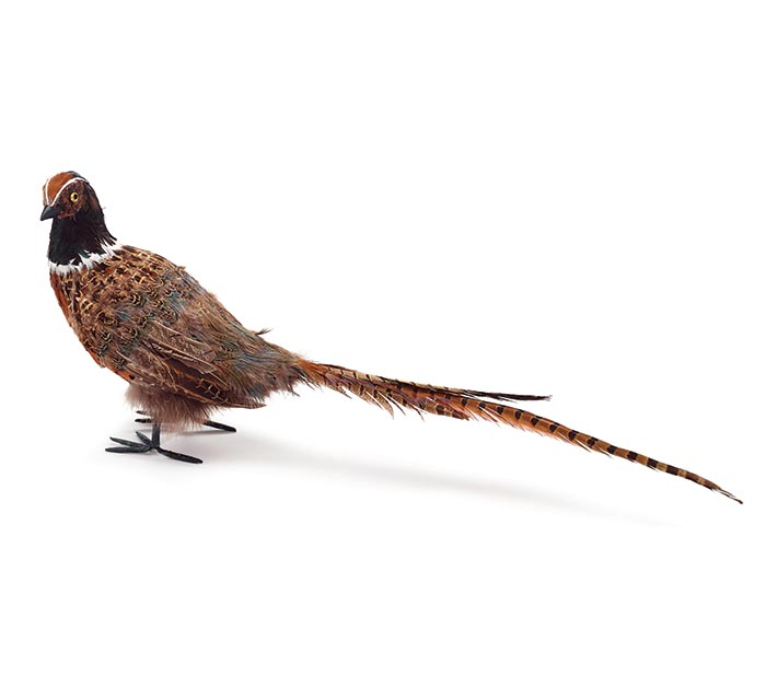 COLORFUL PHEASANT WITH LONG TAIL FEATHER