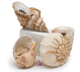 SEASHELL TRIO RESIN VASE