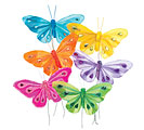 BRIGHT FEATHERS/GEMS BUTTERFLY PICK SET