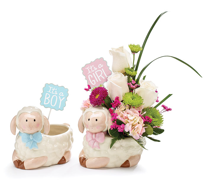 KIT BABY LAMB PLANTER WITH BBY MSG PICKS